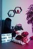 You Must Always try New Hats. (MyNameIsActuallyKareem) Tags: kareemberjaoui portrait portraits creative living room study quote inspirational belgium belgian dog cyclamen flowers life