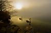 Morning Mist (milance1965) Tags: mist nebel gans gänse millstättersee kärnten österreich sonne fog morning nikon d7000 landschaft see millsttat natur silence ruhe