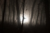 Cold forest (--Conrad-N--) Tags: forest flickr light low sony silhouettes shadow fog fürstenwalde tree trees bulb leaf leaves dark
