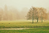 Autumn (Darek Drapala) Tags: autumn nature panasonic poland polska panasonicg5 park trees yellow green lumix light warsaw warszawa sky silkypix fogg