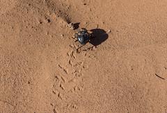 Sahara......-1 (Piefke La Belle) Tags: kef aziza morocco marokko moroc ouarzazate mhamid zagora french foreign legion fort tazzougerte morokko desert sahara nomade berber adveture gara medouar foum channa erg chebbi chegaga erfoud rissani ouarzarzate border aleria 4x4 allrad syncro filmstudios antiatlas magreb thouareg