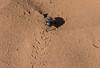 Sahara......-1 (Piefke La Belle) Tags: kef aziza morocco marokko moroc ouarzazate mhamid zagora french foreign legion fort tazzougerte