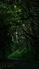 Waipio (61) (BoyUtot) Tags: waipiovalley waipiofalls waimea surfing hiking trekking dronephotography mavic panasonicgh1 hawaii bigisland lumix 100300mm travel nature landscape seascape honokaa ramesesmendoza