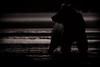 Last Light  1U6652 (Dr DAD (Daniel A D'Auria MD)) Tags: brownbears brownbearcubs bears cubs nature wildlife mammals predators livingwithbears grizzly grizzlies coastalbrownbears alaska lakeclarknationalpark danieladauriamd drdadbooks childrenswildlifebooksbydanieladauriamd july2017 grandtetonnationalpark gtnp bearsofwyoming grizzlybears september2017 kenai kenaipeninsula