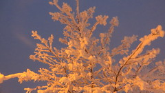 IMG_4360 (Mr Thinktank) Tags: raureif frost