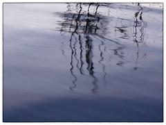 Tristura (Armin Fuchs) Tags: arminfuchs tristura tristesse trist water flood hightide blue reflection river rivermain trees