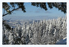 Postcard from Oslo (K. Haagestad) Tags: nordmarka forest oslo norway winter trees snow frame