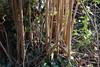 CKuchem-6892 (christine_kuchem) Tags: austrieb baum bäume frühjahr garten haselnuss naturgarten neuaustrieb nussbaum privatgarten ruten stamm stöcke wildgarten wildtriebe winter naturnah natürlich neu wild äste