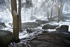 Under the trees (PentlandPirate of the North) Tags: theroaches snow staffordshire peakdistrict trees rocks magical