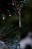 Frio. cold (.Guillermo.) Tags: macrofotografía macro árbol nieve cold frio agua water green tree nikon sigma winter invierno