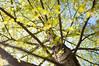 Young Birch Leaves (Enaruna) Tags: 24mm 24mmf14 24mm14 ast baum birch birchleaves birchtree birke birken birkenblätter blätter branch branches bäume foliage frühling leaves light pflanze pflanzen plant plants sonnenlicht sonnenschein spring sunlight sunshine tree trees zweige äste