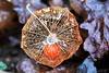 ~~ L 'Amour en cage ... un peu mouillé ! ~~ (Joélisa) Tags: macro fleur flower gouttelettes eau pluie janvier2018 amourencage