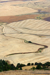2017_08_24_2902-PS (DA Edwards) Tags: washington eastern palouse hills steptoe butte fields wheat harvest abstract minimalism color patterns da edwards photography summer 2017