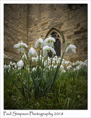 Snowdrops and Church (Paul Simpson Photography) Tags: church snowdrops worlaby lincolnshire winter february2018 showdrop flowers flower nature churchyard naturalworld petals stonebuilding villagechurch leaves sonya77 england imagesof photoof photosof imageof rural ruralengland galanthus