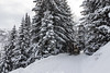 Riders on the snow (Wayfarer in the clouds) Tags: snow winter mountain horses sledge italy landscape trees road ski
