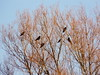 one of the few fine february days (achatphoenix) Tags: rheiderland roadtrip ostfriesland eastfrisia rural februar february crow