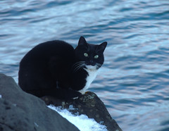Waiting for the fish. (NoukLy) Tags: iceland islande harpa snow sea mer neige noir black chat cat