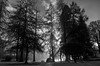 Sun through the trees (PJ Swan) Tags: mist trees scotland woods perthshire dunkeld sun rays atmospheric winter afternoon