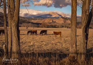 Pastoral Paradise - Boulder County, Colorado