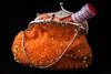 Hot sauce in my bag. (BSchwend1) Tags: hot sauce hotsauce orange sequins handbag eveningbag letsgoout