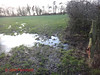 DSC05822 Tanners 40 - 2018 01 17 - Wet Field (John PP) Tags: ldwa tanners tannersmarathon winter 40 miles long distance walkers association january 2018 solo hike johnpp