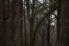 (Pentastar In The Style Of Demons) Tags: canon 5dmk2 ef24105f4 forest mountain trees winter nature landscape