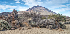 Scrub Mountain (Rob McC) Tags: landscape mountain volcano scrub bushes flora mttiede tenerife spain