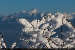 Frozen (Ludtz) Tags: ludtz canon canoneos5dmkiii 5dmkiii montagne mountain mountains montagnes salève hautesavoie 74 montblanc winter hiver froid cold neige snow white blanc blue bleu frozen gel congères ef135|2l arbres trees glace ice