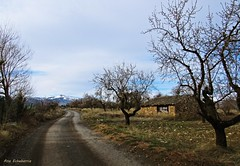 Un paseo de febrero (kirru11) Tags: camino casilla campo árboles hierva peñaisasa cielo nieve quel larioja españa kirru11 anaechebarria canonpowershot