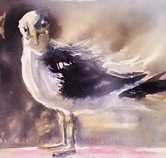 Seagull art (sushipulla) Tags: seagulls birds birdsart inkwash ink inked painting sketchbook sketch sketching seabirds seascape sealife