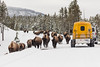 Snowcoaches pass a group of bison near Norris Geyser Basin Overlook (YellowstoneNPS) Tags: jacobwfrank ynp yellowstone yellowstonenationalpark bison roads snow snowcoach winter