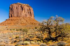 A tree in the valley (doveoggi) Tags: 9719 arizona monumentvalley tree landscape butte