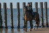 horse on beach (alex.hartsema) Tags: sky horse beach water seaside grass duinen waterkant strand lucht paard girl walcheren zeeland nederland