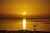 Sunset at Bunche Beach FL (RoseySpoonbill) Tags: bunchebeach egret sillouette