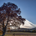 Catchlight tree Auchterarder_G5A4907 thumbnail