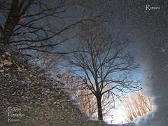 Rimini - 29.12.2017 - Gianni Porcellini - 2000 (Gianni Porcellini) Tags: pozzanghera water acqua albero riflesso pioggia temporale strada cespuglio luce ombra
