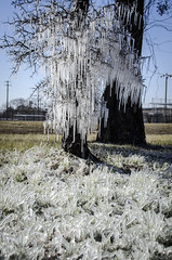Houston Ice Tree (TheReilDeal) Tags: houston texas ice icicles storm winter icestorm frozen
