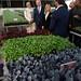 PM Netanyahu and his wife Sara visit greenhouses in Gujarat with India's PM Modi