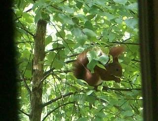Squirrels mealtime