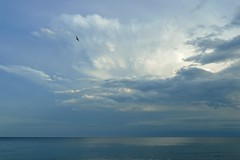 high up (l i v e l t r a) Tags: seagull bird solitary alone clouds manistique michigan mi fly flight nature serene ripples waves lake reflection calm f8 sigma35mmart nikon df dramaticsky natural light