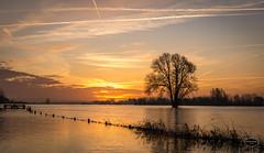 Sunrise,...30-1-18 (@FTW FoToWillem) Tags: zon zonsopkomst sun sunrise landscape landschap boom tree water rivier river merwede loevestein gorinchem gorcum hoogwater nederland netherlands holland hollanda holandes holande zuidholland sky lucht nature natuur ftw fotowillem willemvernooy morgenstond