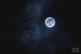 31/365 - Super Blue Moon