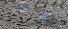 Soap bubbles on the Dam Amsterdam. (Digifred.nl) Tags: digifred 2018 amsterdam nikond500 nederland netherlands holland iamsterdam straat street city grachten streetphotography zeepbellen damsqaure soap bubbles toeristen candid