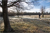 Frost Coated Clearing (Mabacam) Tags: 2018 london richmond richmondpark park outdoor winter frost people walking walkers landscape trees