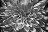 365 - Image 47 - Macro... (Gary Neville) Tags: 365 365images 5th365 photoaday 2018 sony sonycybershotrx100v rx100v v mk5 garyneville raynox