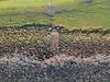 The Man on the Stairs (Fotomondeo) Tags: drone aerialphotography djispark dji newport wales cymru