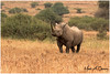 World Wildlife Day 2018 (MAC's Wild Pixels) Tags: worldwildlifeday2018 blackrhinoceros hooklippedrhinoceros rhino unicorn wildlife animal africanwildlife wildafrica wildanimal mammal endangered criticallyendangered safari gamedrive savannahplains outdoors outofafrica macswildpixels kenya africa coth ngc coth5