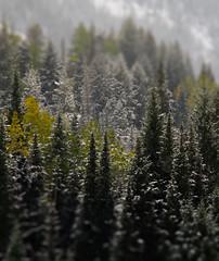 Snowbird (Jovan Jimenez) Tags: forest tree wood woods landscape sony alpha 6500 ilce nikon series e eseries seriese 100mm f28 nature utah snowbird photoshop tilt shift fake
