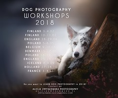 LEARN DOG PHOTOGRAPHY IN 2018! Dog Photography Workshops 2018 (Alicja Zmysłowska) Tags: dog dogs dogsphotography dogsphotographer photographer photography workshop workshops learn border collie iceland finland holland poland belgium england denmark scandinavia puppy puppies flower spring autumn education learning class classes