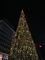 New Year tree at Knez Mihailova street, Belgrade. 🎄 (seki_952) Tags: tree christmastree newyeartree christmas newyear serbia belgrade